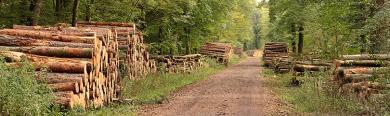 Forstkartell Rundholzvermarktung